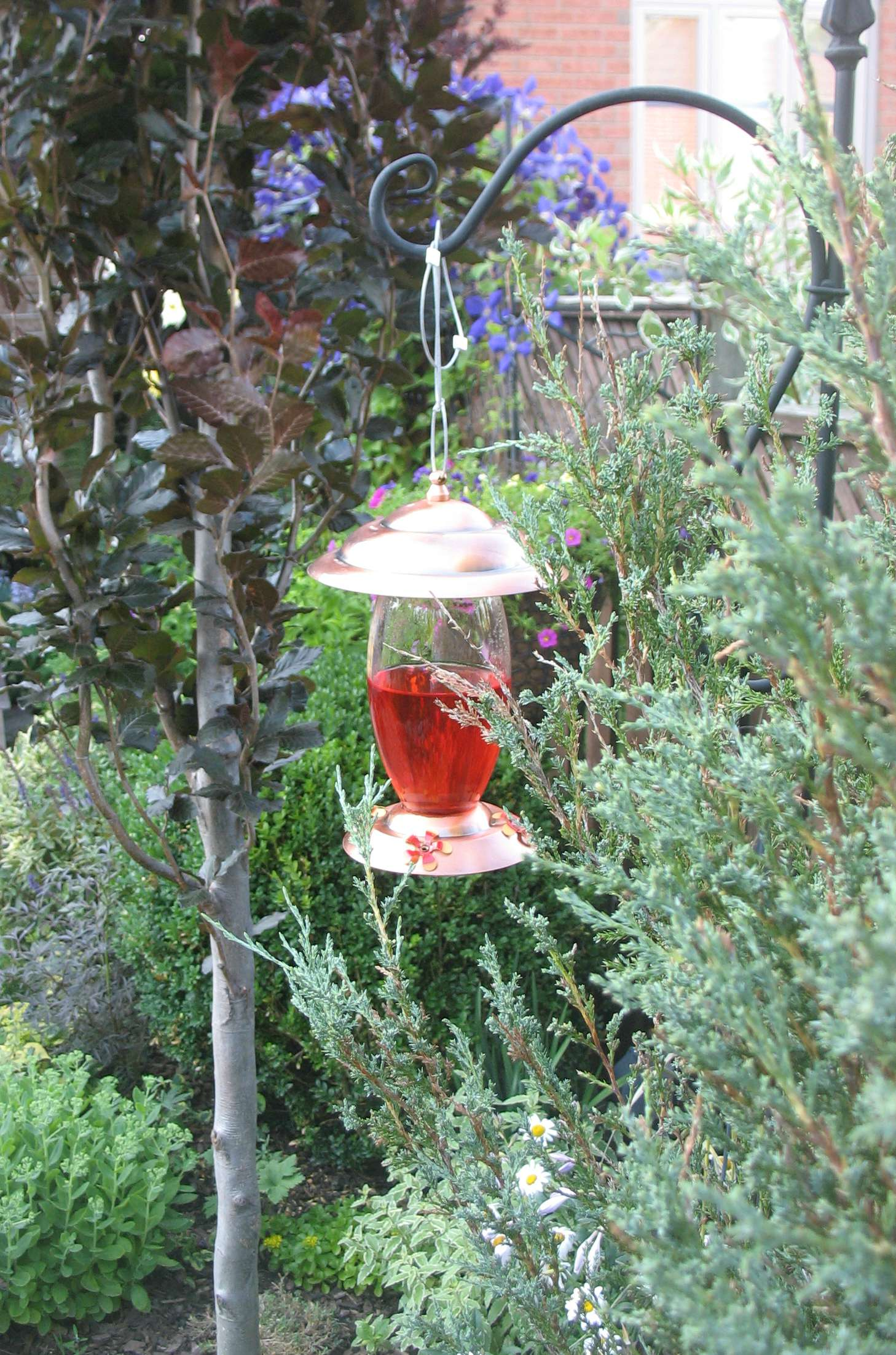 HummingBird Feeder LR